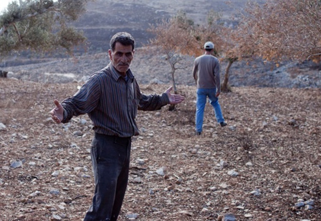 Mr Najjar after finding his olive trees had been vandalized, Burin, Palestine
