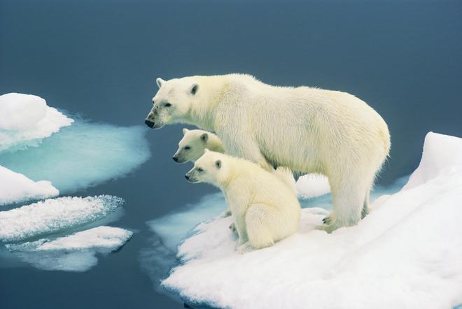Thoughtful.Stuart-Yates.Svalbard.Norway
